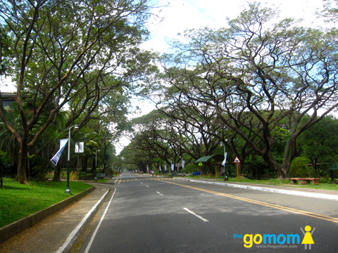 UP Diliman Bikers and Runners Lane