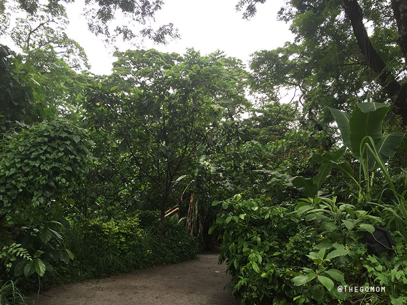 Dinosaur-Island-Clark---Pathway